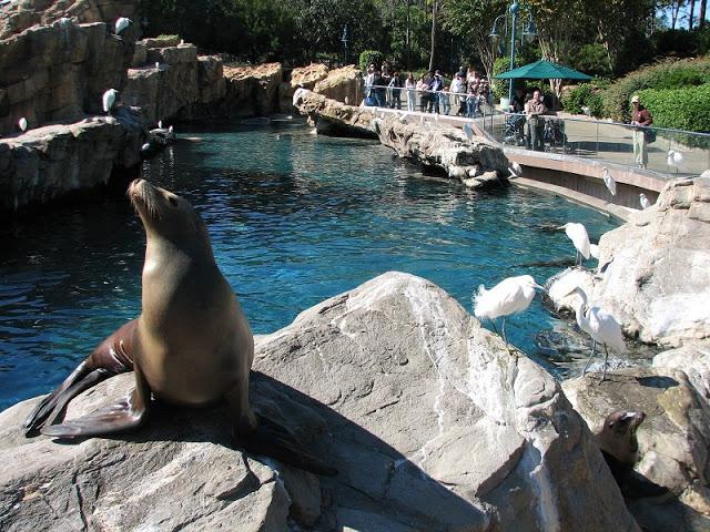 Pacific Point Preserve en Sea World en Orlando
