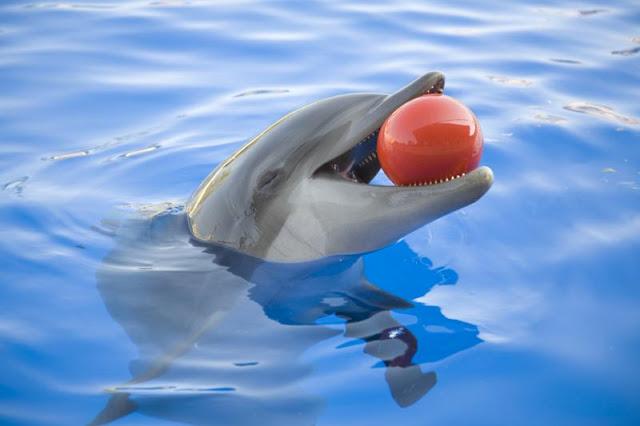 Acuario Miami Seaquarium - delfín