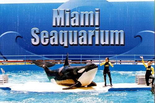 Acuario Miami Seaquarium