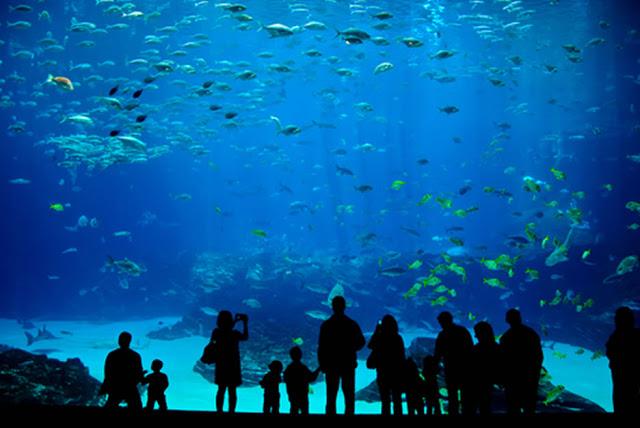Acuarios en el Miami Seaquarium