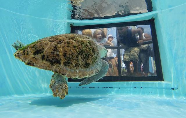 Loggerhead Marine Life Center en Palm Beach