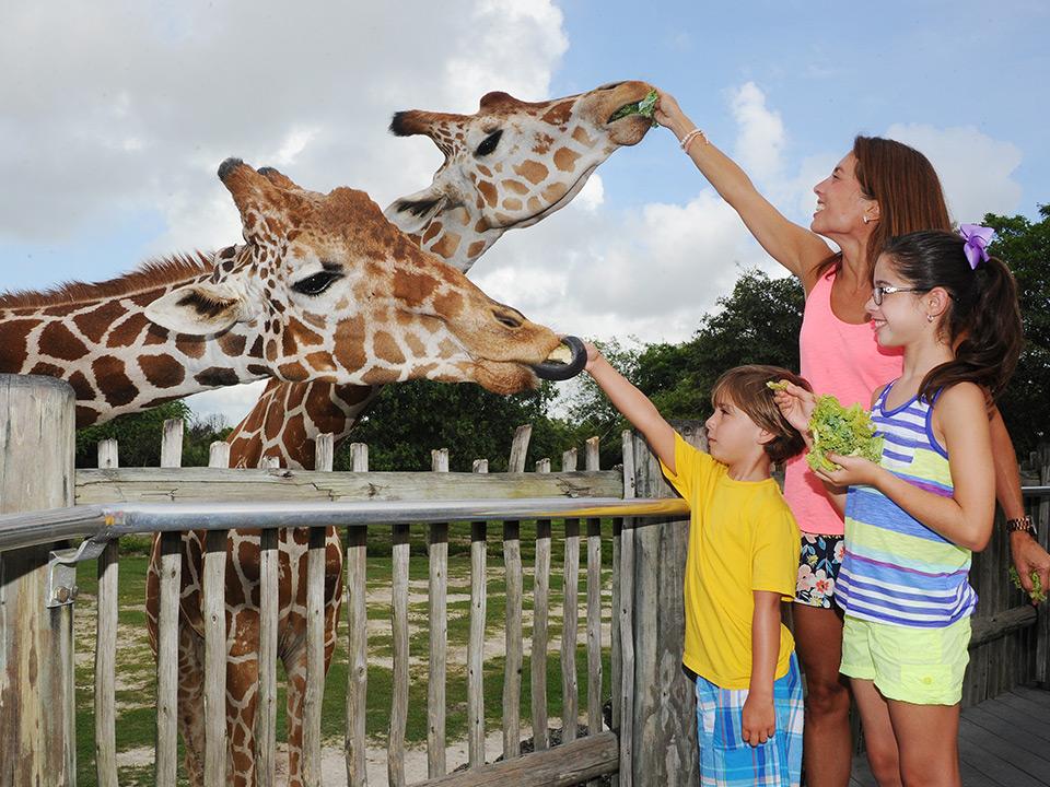 Animales de Zoológico de Miami Zoo en Florida