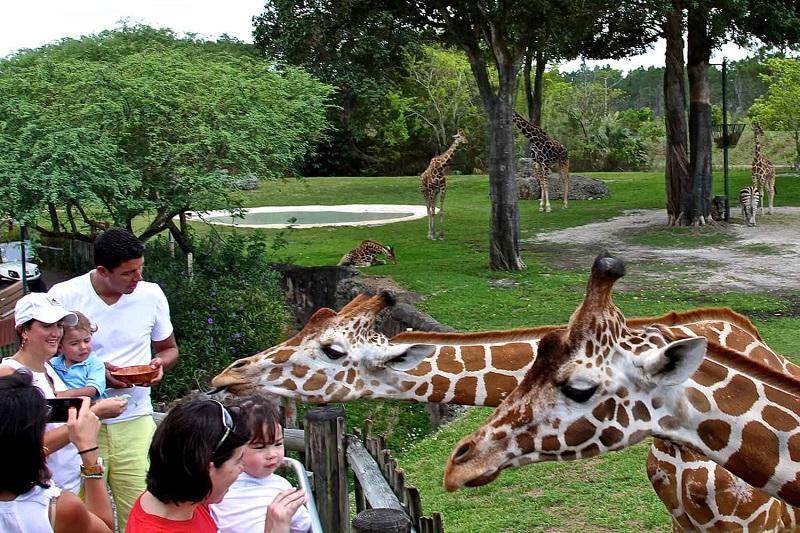 Zoológico de Miami Zoo en Florida